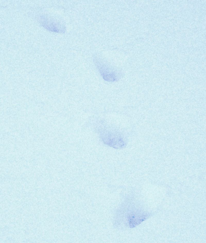 Bob the cat prints
